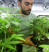 How Legal Marijuana Can Affect Your Small Business